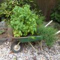 Reclaimed Wheelbarrow Container Herb Garden