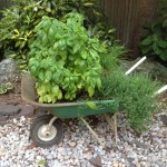 Reclaimed Wheelbarrow Container Herb Garden