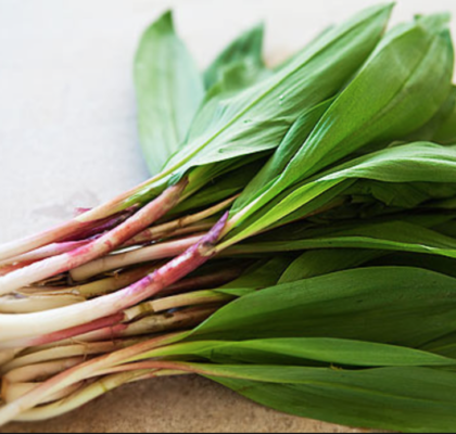 Kitchen Spotlight : Spring Ramps
