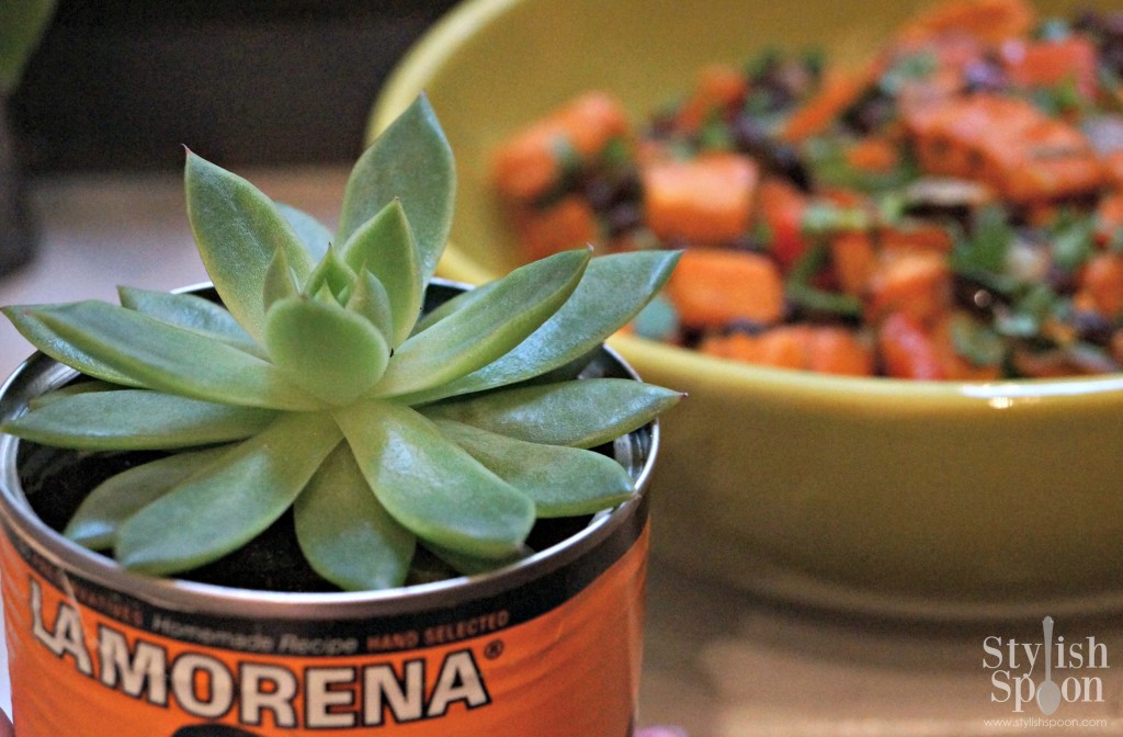 succulent cans