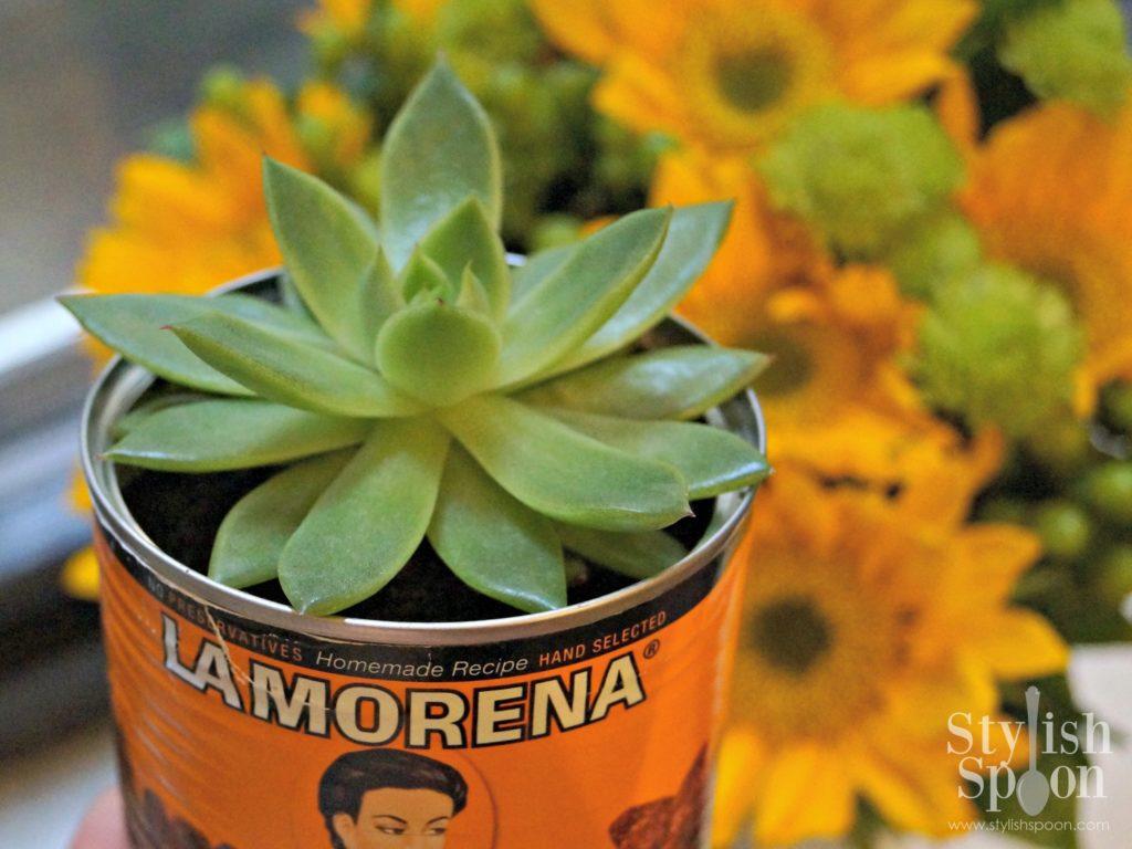 succulent in la morena mexican can planter