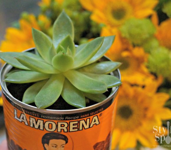 succulent can with watermark