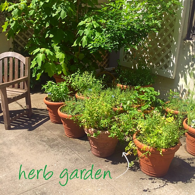 backyard container herb garden