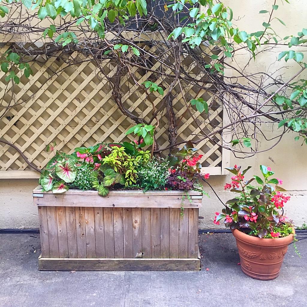 backyard flower box