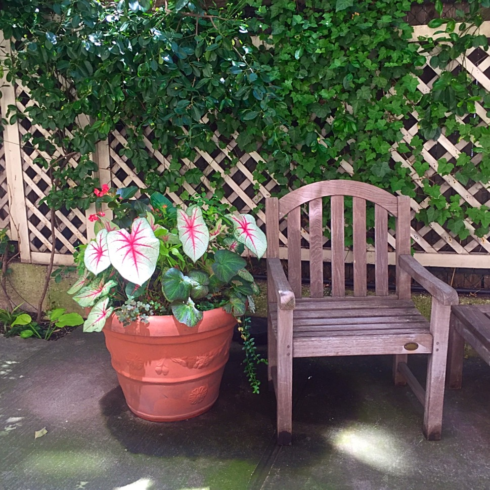 There are pretty little areas to sit nestled all around the backyard. Some in the shade, some in the sun.